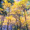 Elowah Falls Trail
