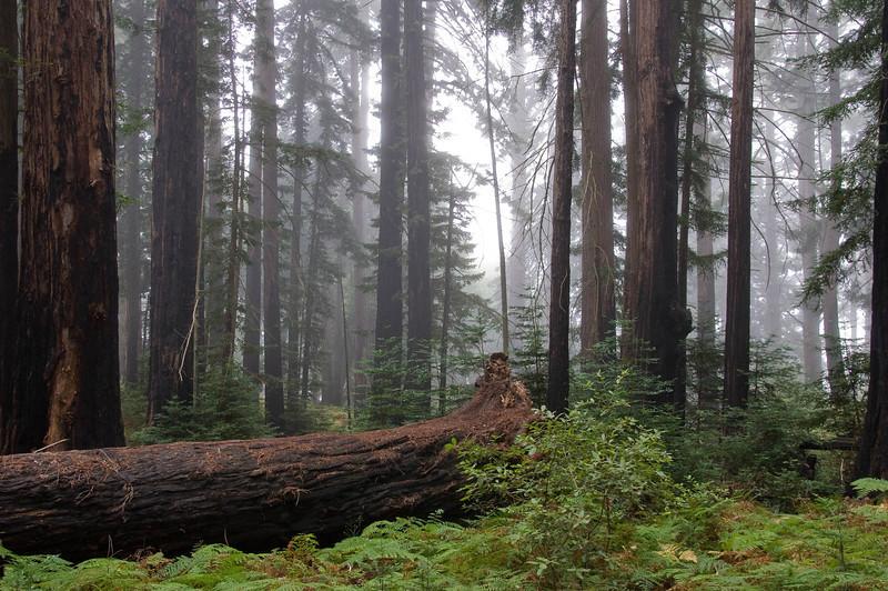 Muri Woods