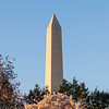Washington Monument and Cherry Blossoms