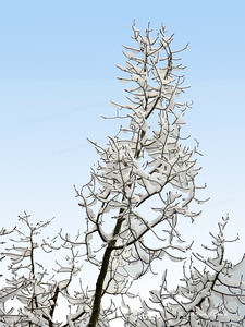 snow on aspens