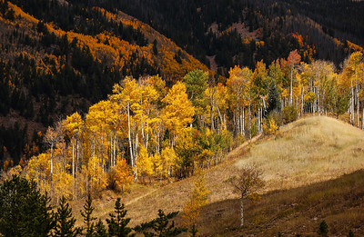 Aspens In Vail
