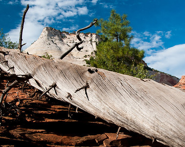 Dead Tree at Zion