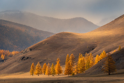 Gold of mountains