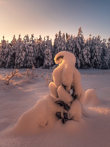 Snow general