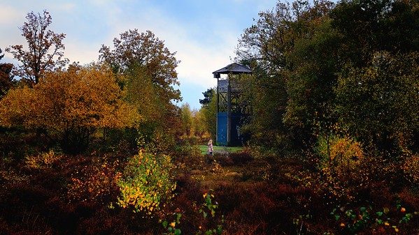 Snelsmore Common: Autumn Tower