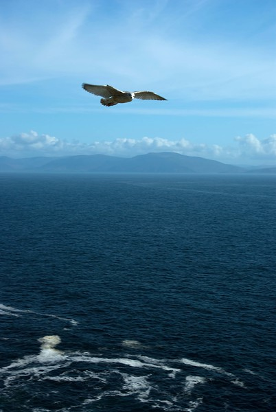 Dingle Seagull, Kerry