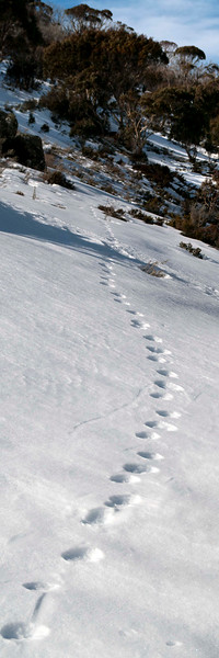 Footsteps, Dead Horse Gap, Snowy Mountains