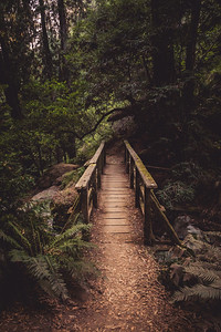 Mt. Tam Bridge