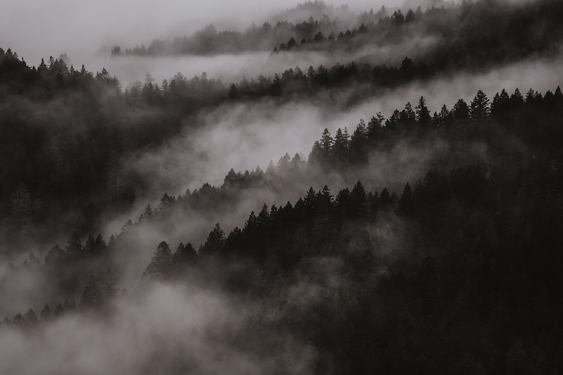 Muir Woods in the Fog