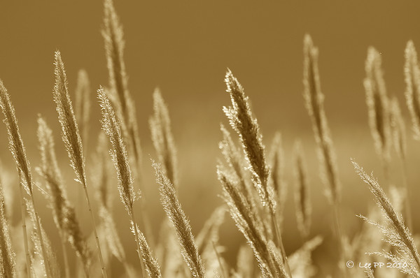 Grass scape