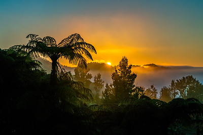 Foggy Dawn In Waitomo