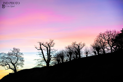 Enchanted forest. Storybook image of trees and magenta sky