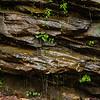 Amicalola Falls -8522