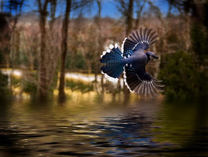 Blue Bird3
