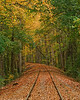 Curves of Life - Fall_