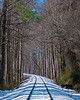 Curves of Life - Winter_