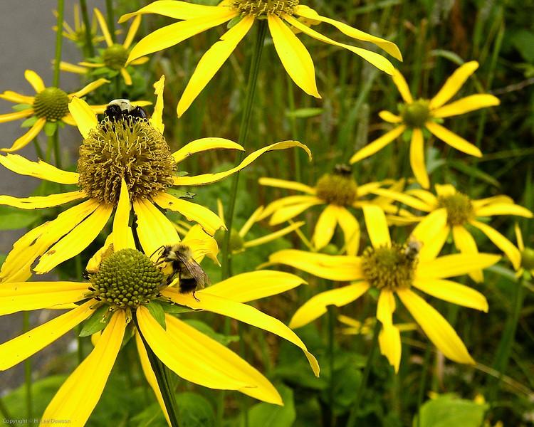 Gatlinburg Bees