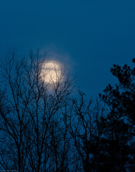 Moonrise through the trees