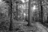 The Forest - 1st Place Black & White at Capital City Camera Club February 2009 Open Competition
