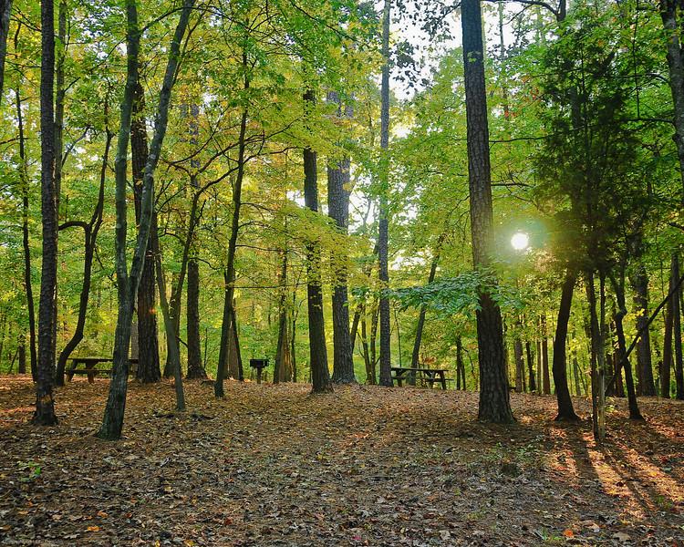 Umstead Park NC 40