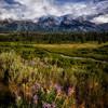 Wildflower Season in Grand Teton National Park