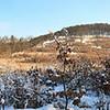 """A Lajosforrástól a Holdvilág-árok felé félúton ilyen kilátás esik a Nagy Csikóvár (557m) csúcsára. 15 képből, Hugin szoftverrel lett összeállítva. 2010. január 24-n délután készült.  <a href=""""http://mayermiki.smugmug.com/Landscapes-1/Panorama/13212780_piTRe#959484901_87Cb8-O-LB"""">IDE</a> kattintva megnézheted nagyban!"""