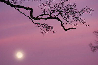 Moon at sunset