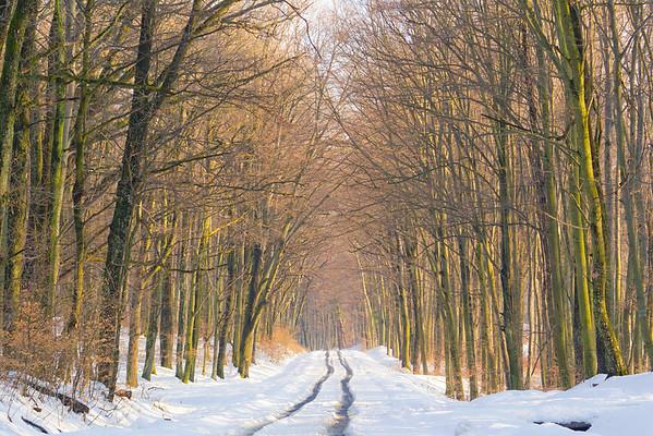 A vétyemi ősbükkösben vezető út