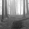 A galyatetői kilátó a ködben