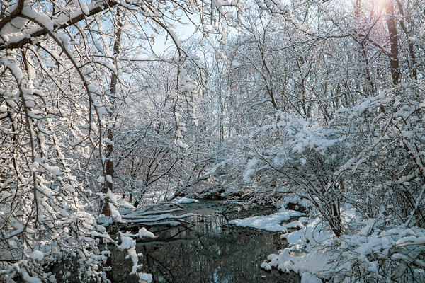 snow-5251