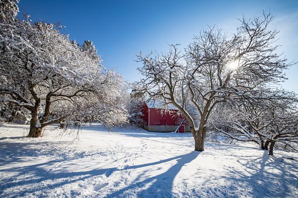 snow-5237