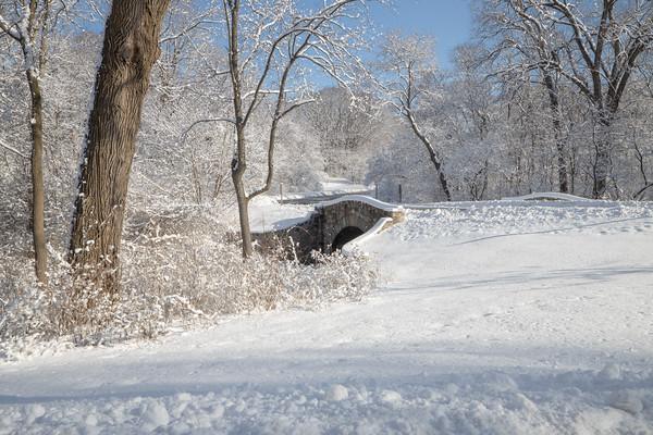 snow-5275