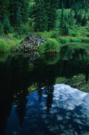 Beaver Lodge 7496