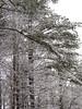 Stagecoach Rd Snowfall 7