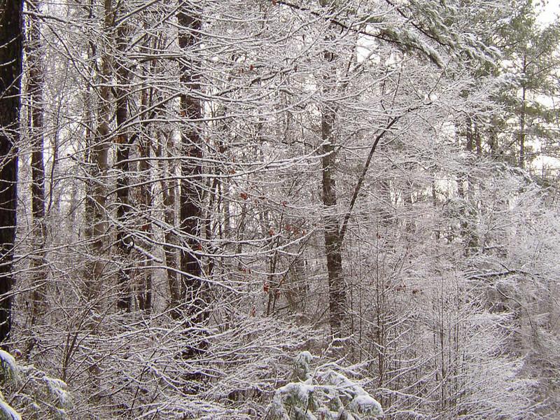 Stagecoach Rd Snowfall 5
