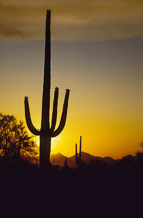 Sonora Desert-93516