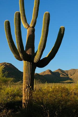 Sonora Desert-1443
