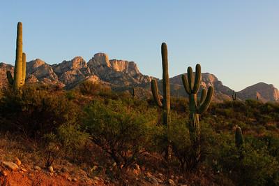 Sonora Desert-1164