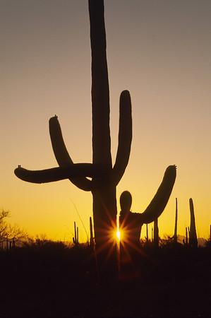 Sonora Desert-9610
