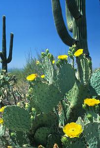Sonora Desert-339
