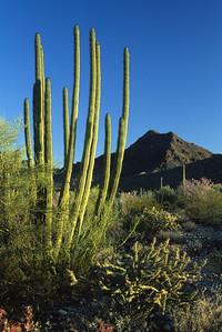 Sonora Desert-337