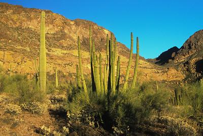 Sonora Desert-338