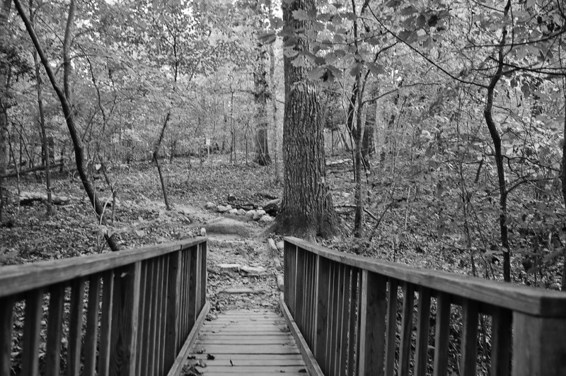 Umstead Park 14