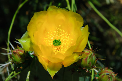 Cactus-3084