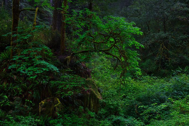 ~ Hobbit Heaven ~