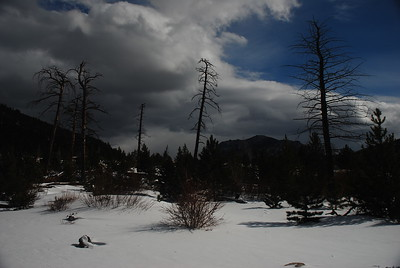 Serene Winter