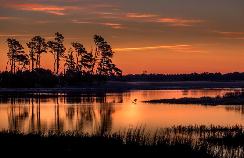 chincoteague at dawn