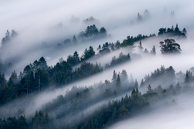 Fog through the trees, Mt Tam