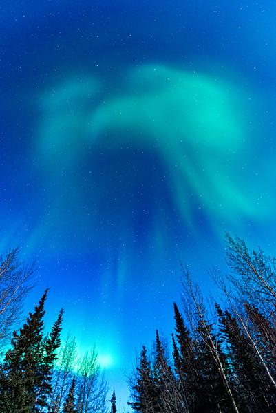 Aurora borealis seems to take on the shape of a bird over Wiseman, Alaska.