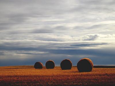 Saskatchewan Hay Roles original